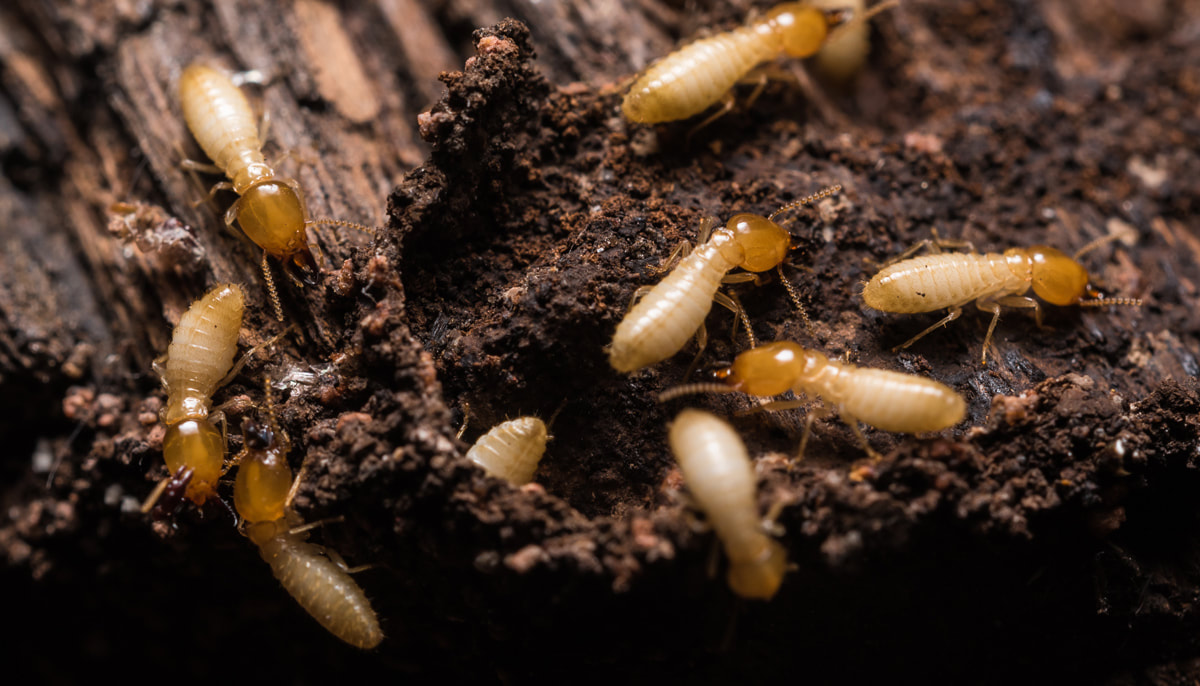 3 Creepy Facts That Will Make You Wish You Had Termite Control