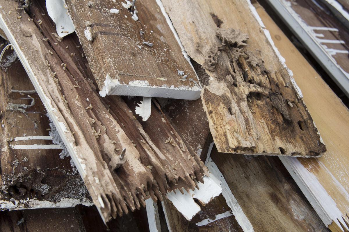 3 DIY Termite Control Tactics We Actually Recommend