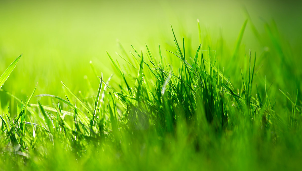 3 Reasons We Always Recommend Sod Install Over Grass Seed