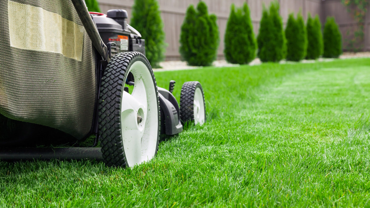3 Things That May Be Working Against Your Lawn Care