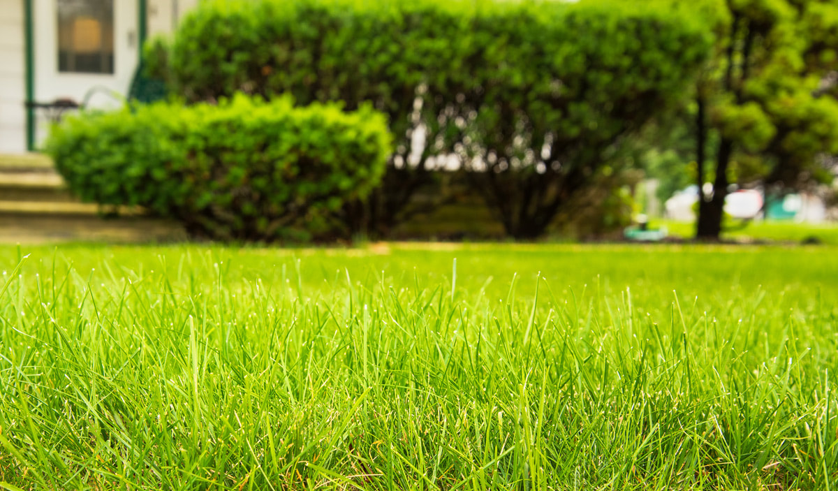 3 Things You'll Miss Out On This Summer Without Professional Lawn Care