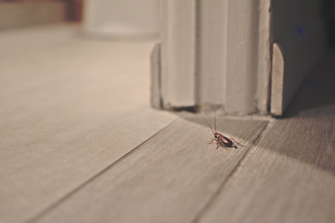 4 Things We Want Our Clients To Know About Pest Control