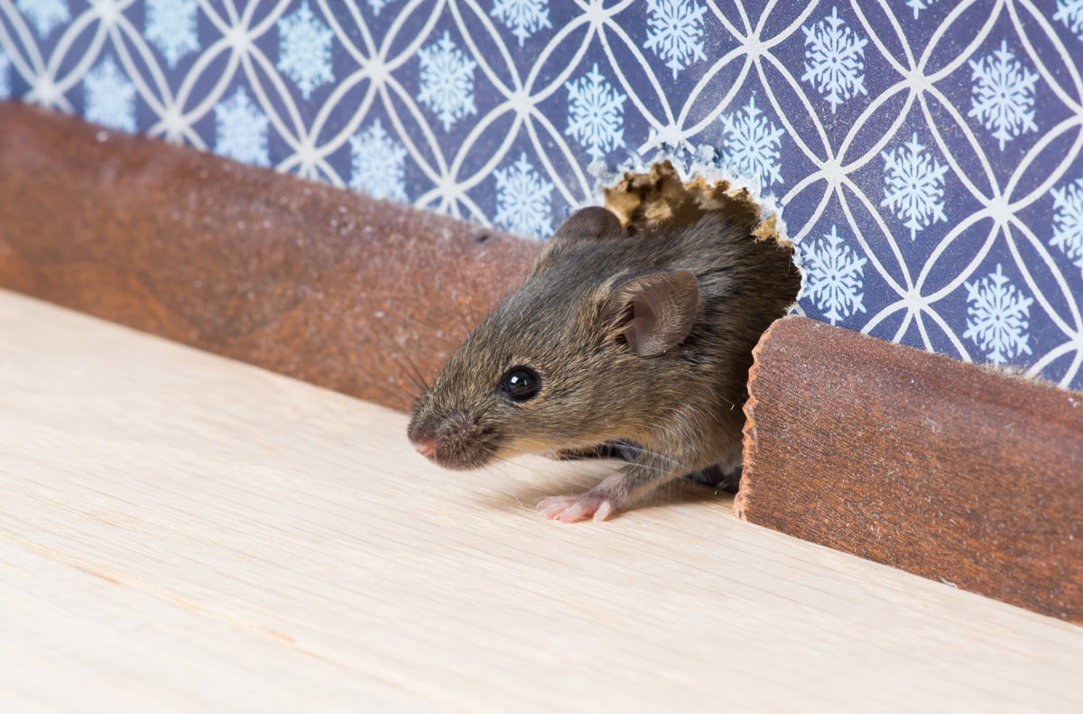 5 Ways To Clear Unwanted Guests After The Holidays