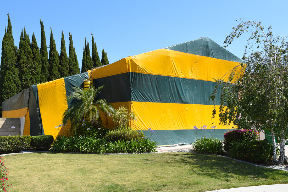 A Closer Look At The Fumigation Solution