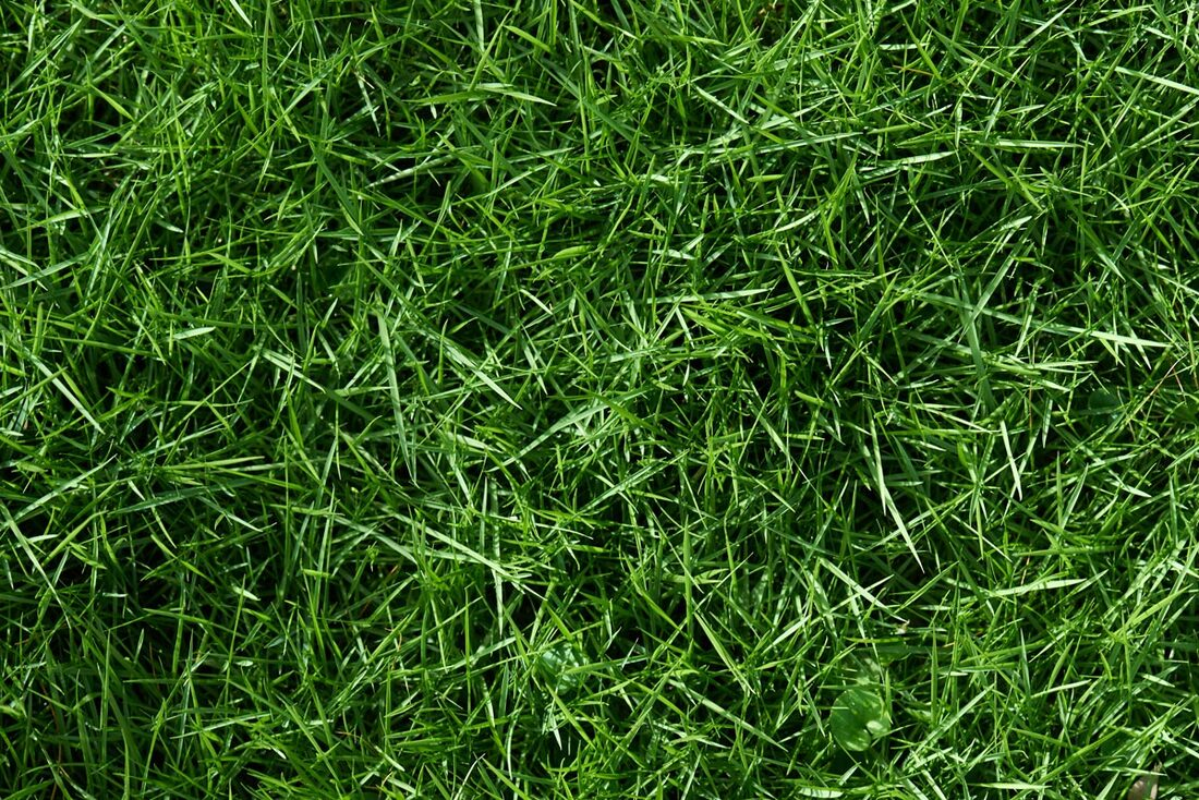 Can Professional Lawn Care Fix My Yellow Grass?