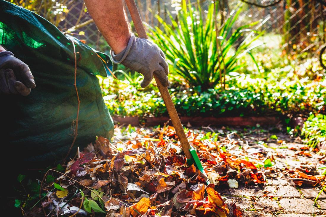 Choosing Plants That Make Lawn Care Simple