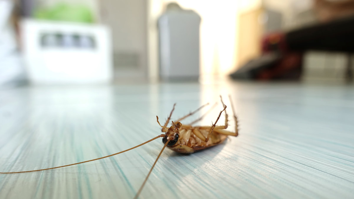 Do I Really Need Pest Control During Winter?