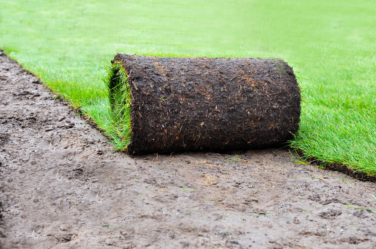 Get It Right The First Time: Why You Should Hire Holder Pest Control For Your Sod Installation