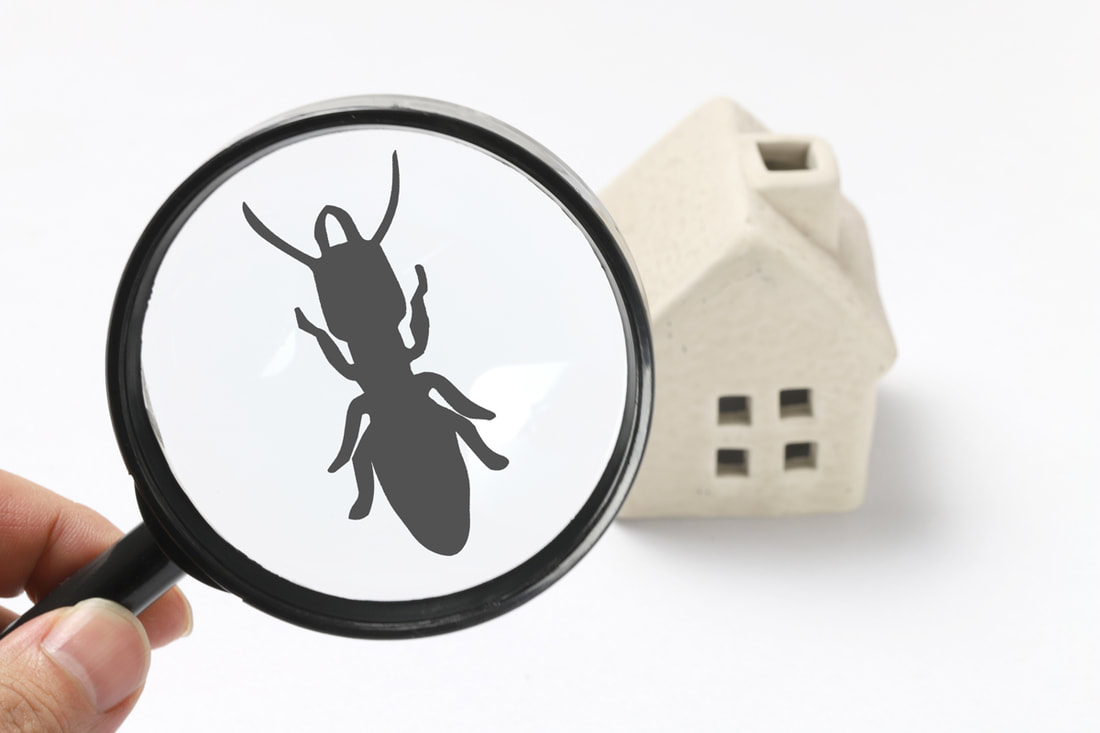 How Do We Know Termite Control Is Working?