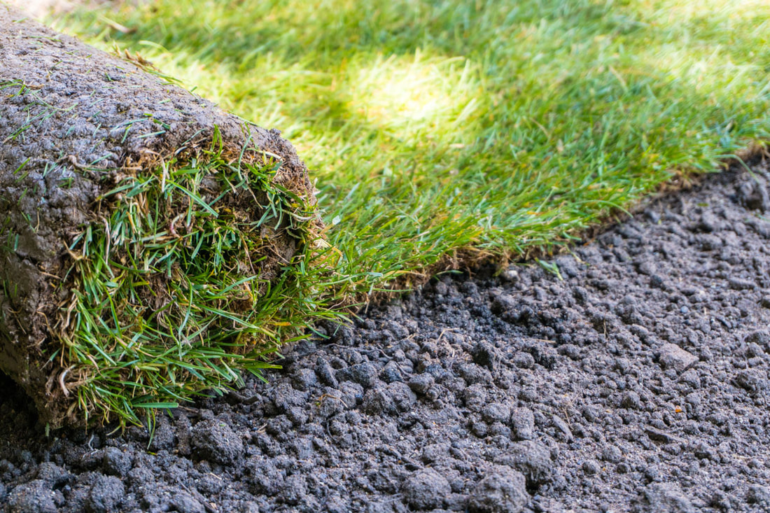 How To Care For Your New Sod Install