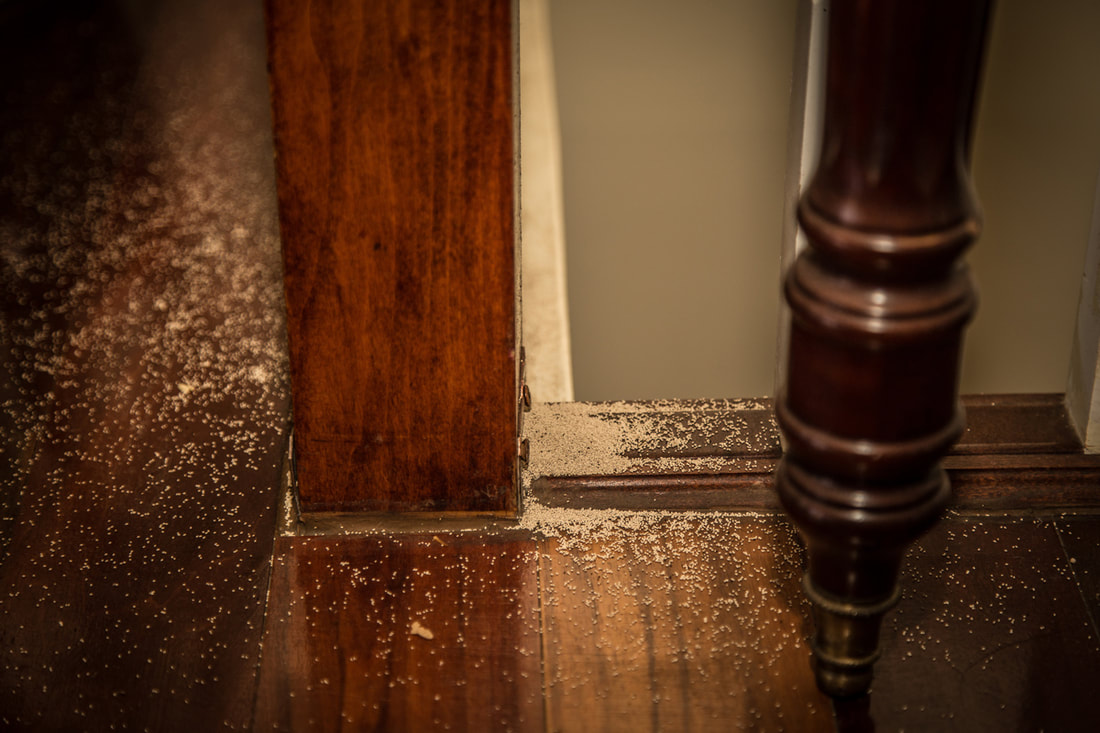 How To Keep Termites From Coming Back