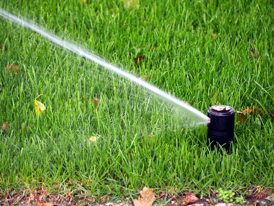 Irrigation Tips For Florida's Driest Season