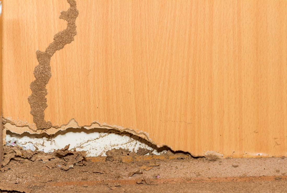 Is It Too Late For Termite Control?