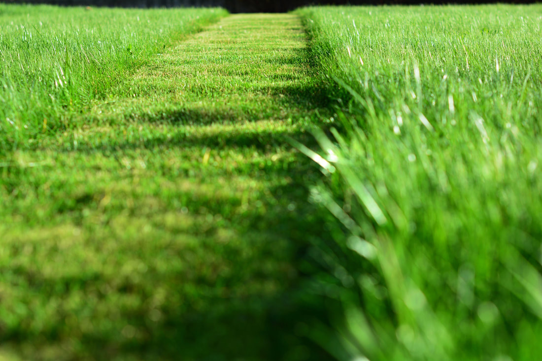 Lawn Care Issues: What Is Eating My Yard?