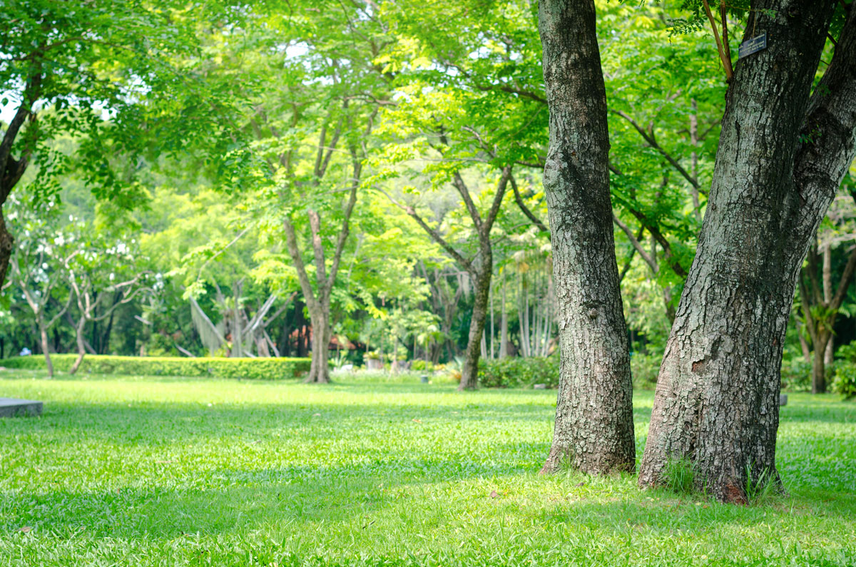 Lawn Care Tips For Growing Grass In Your Shady Yard
