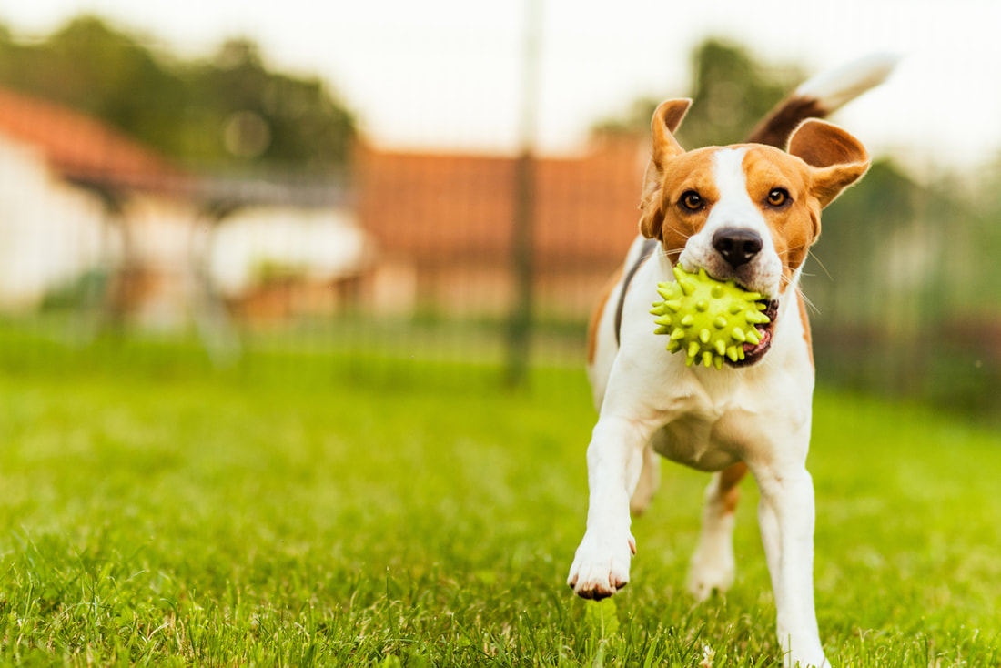 Pest Control For Pet Owners