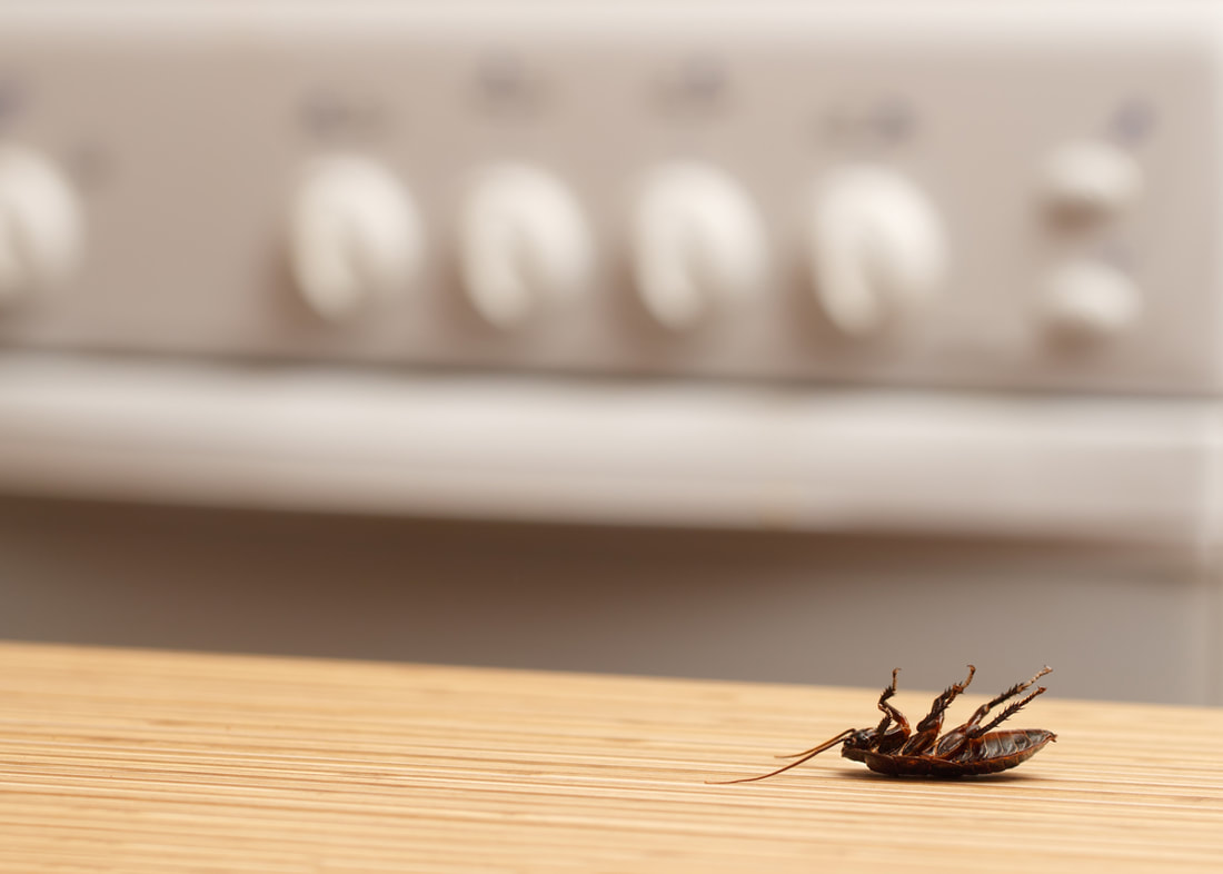 Pest Control Secrets: Where Are These Roaches Hiding?