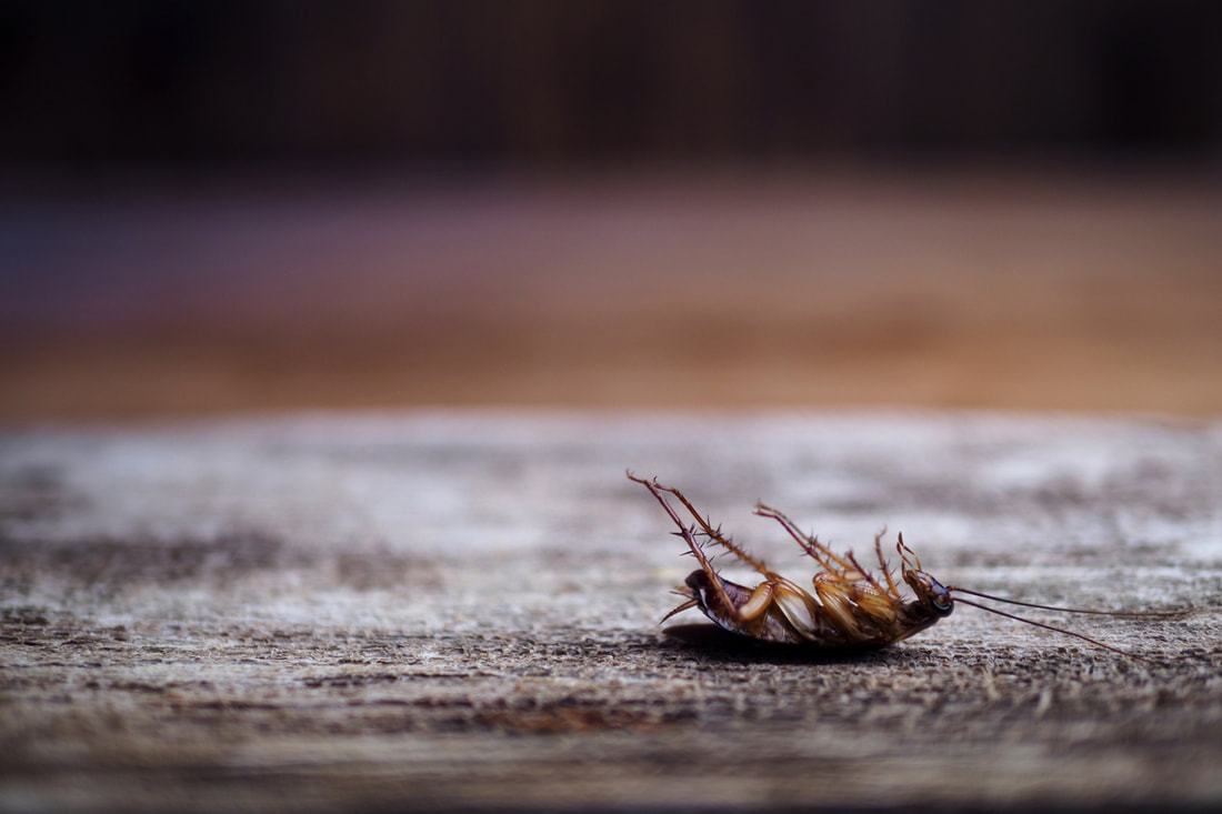 Pest Control Solutions For Getting Rid Of Roaches