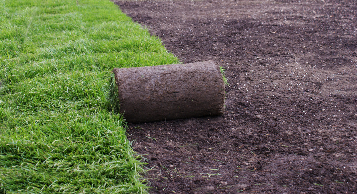 Put An End To Your Turf Battles With A New Sod Install