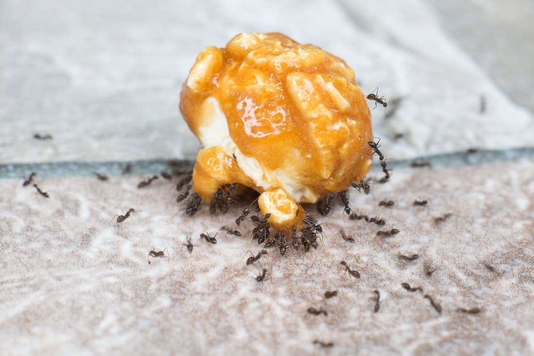 Say Adios To These Unwanted Kitchen Pests