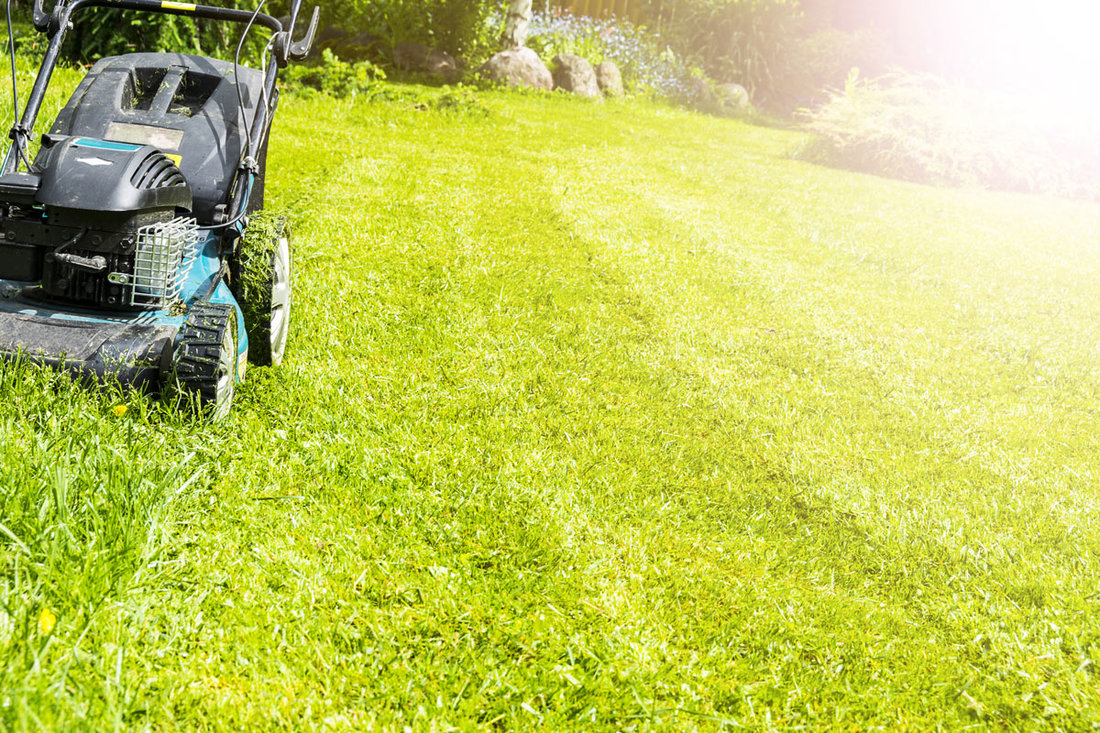 The Truth Behind 4 Lawn Care Myths
