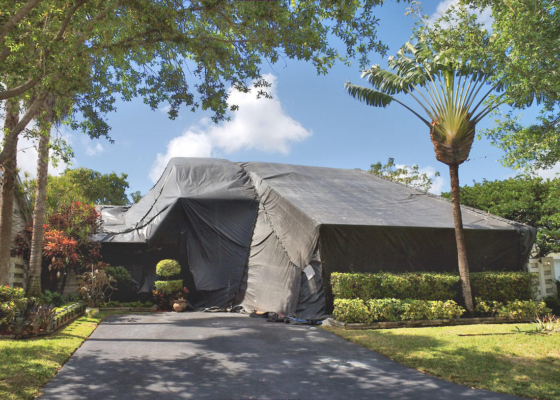 What Are You Really Paying For When You Get Termite Control?