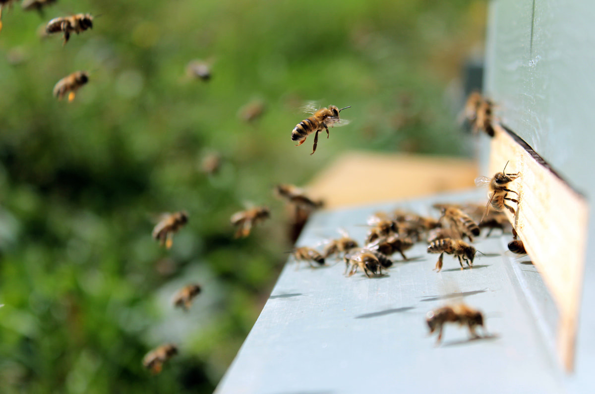 What Is the Right Approach to Handle Your Hive?
