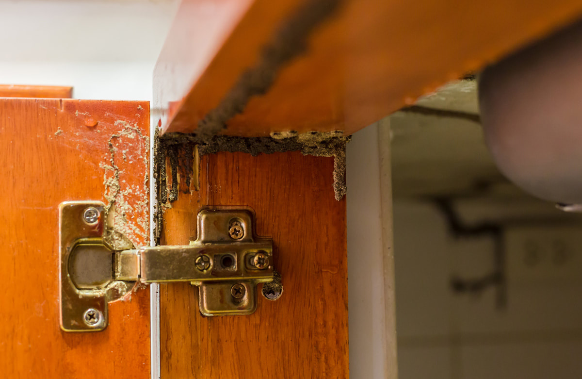 When To Cut The Cord With Your Termite Control Company