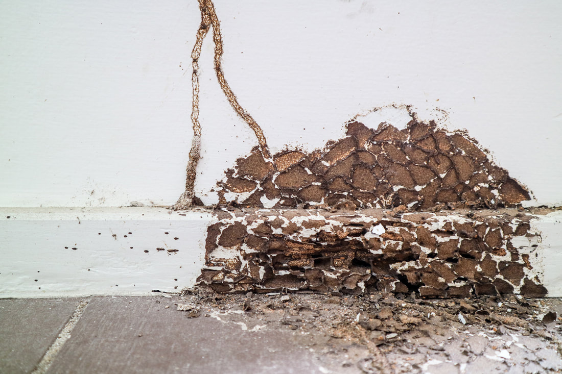 Why Termite Control Is A Must For Your Investment Property