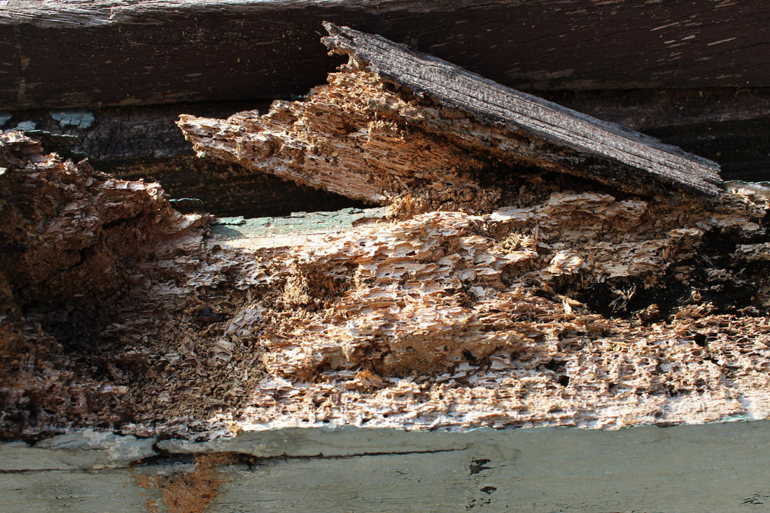 Why You Should Be Budgeting For Termite Control