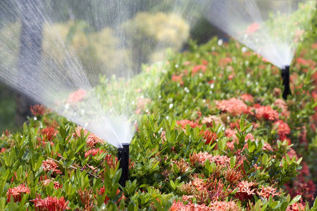 Your Irrigation System Is Causing These Major Problems