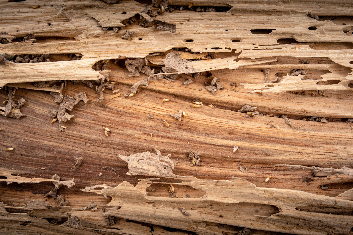 3 Reasons Why Everyone Needs A Termite Control Inspection