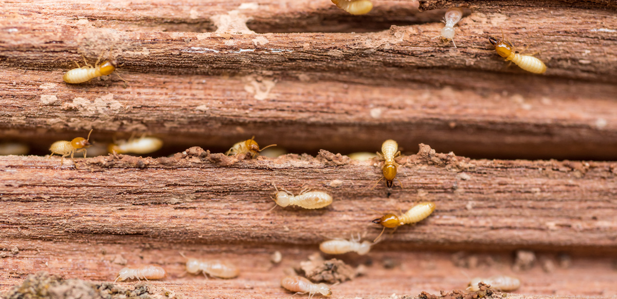Gross Facts That Will Have You Calling For Termite Control