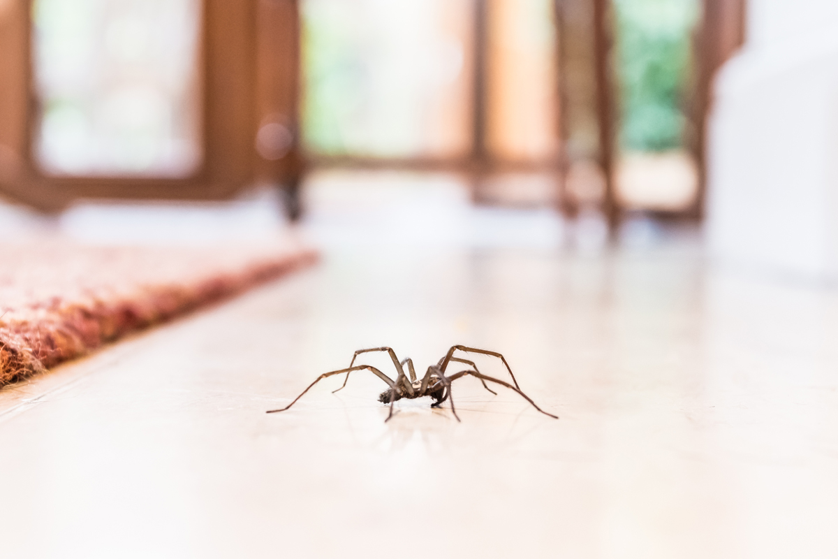 What The Pest Control Pros Want You To Know About Spiders