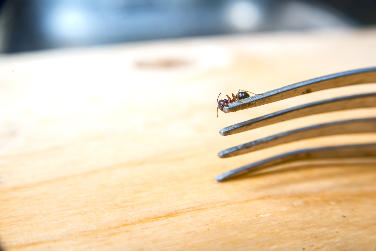 Common Signs Your Home Needs Pest Control