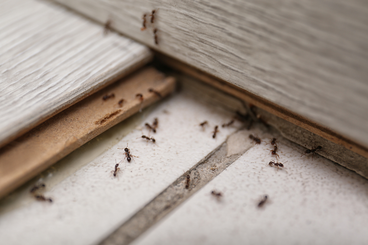 3 Qualities of an Ideal Pest Control Customer