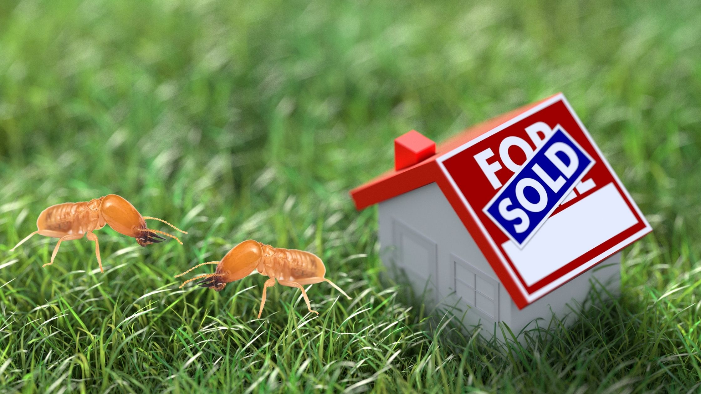 The Importance of Termite Control in Real Estate Transactions