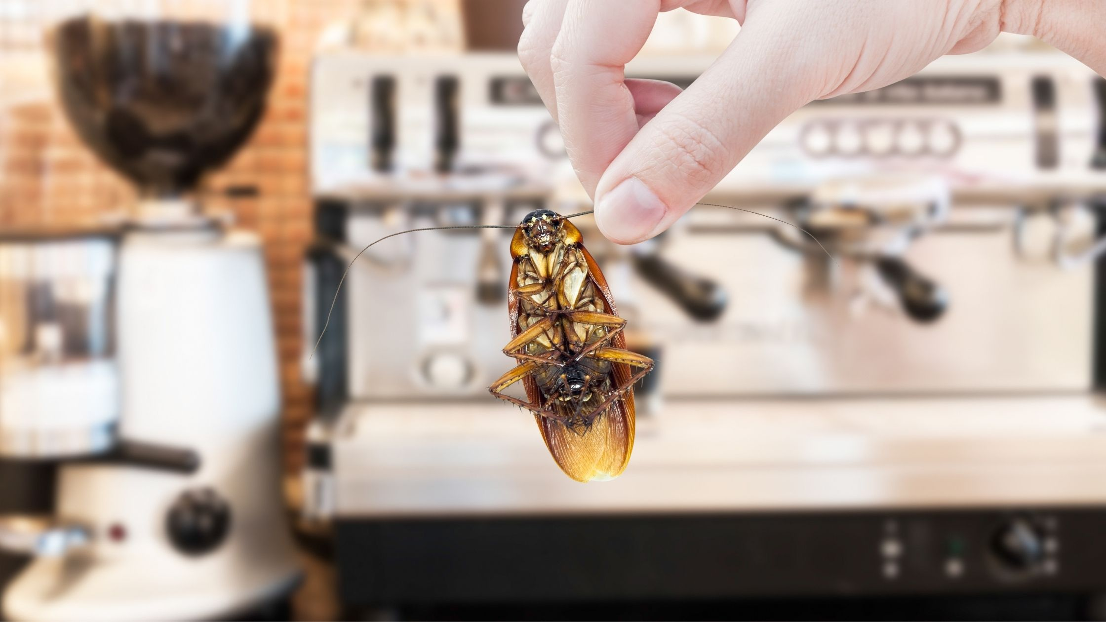 These Cockroach Facts Are The Best Pest Control Motivation